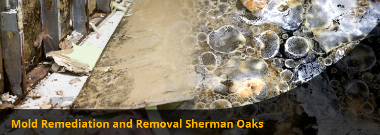 Mold Remediation and Removal Sherman Oaks CA